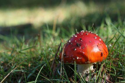 Herfstkleuren fotograferen - paddenstoel in de herfst