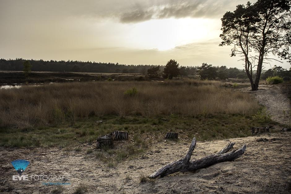 Landschapsfotografie - hoe krijg je de scherpste foto's